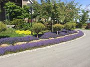 Abbotsford Landscape Maintenance  By Transformations Landscaping